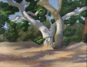 Oil painting of Sycamore trees
